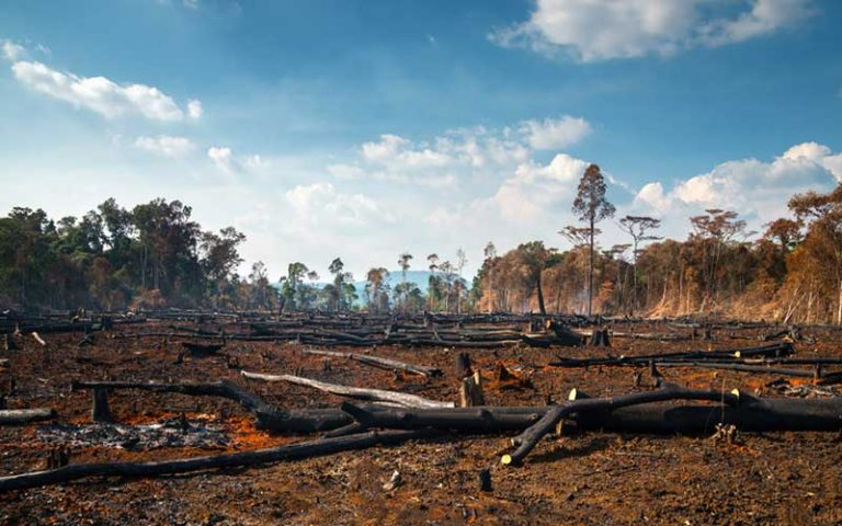 causes-deforestation